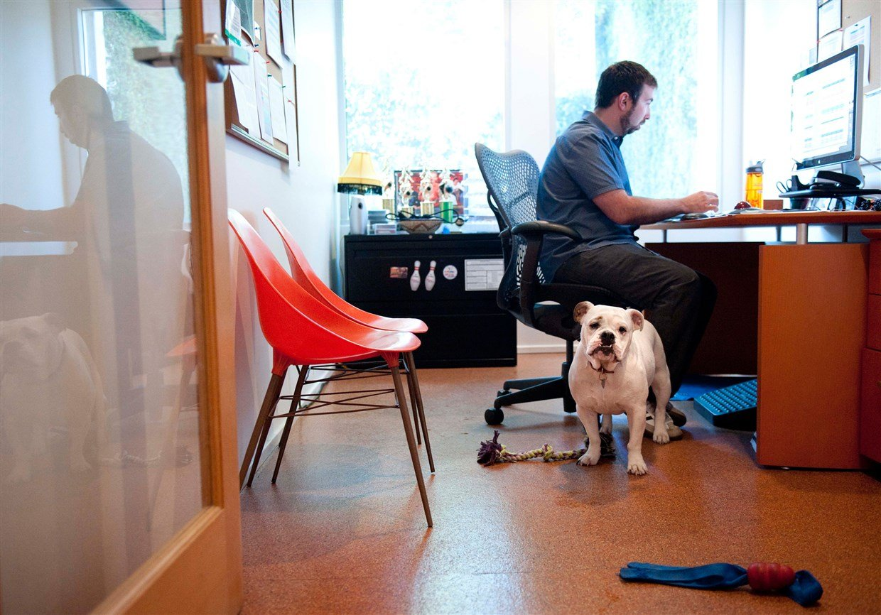 Picture of a man in his office with his dog looking on to represent a pet-friendly office.