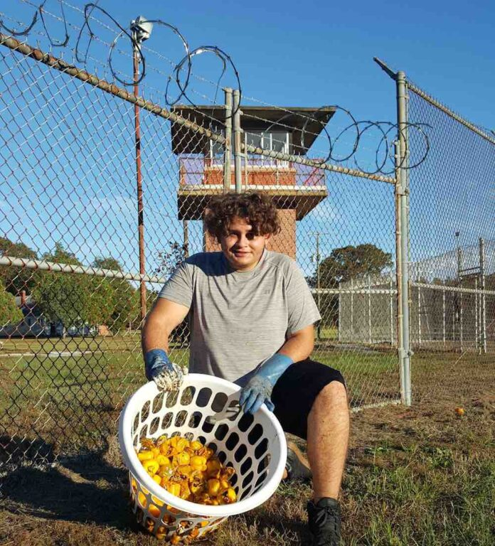 Picture of a young man who works at a farm converted from an abandoned prison