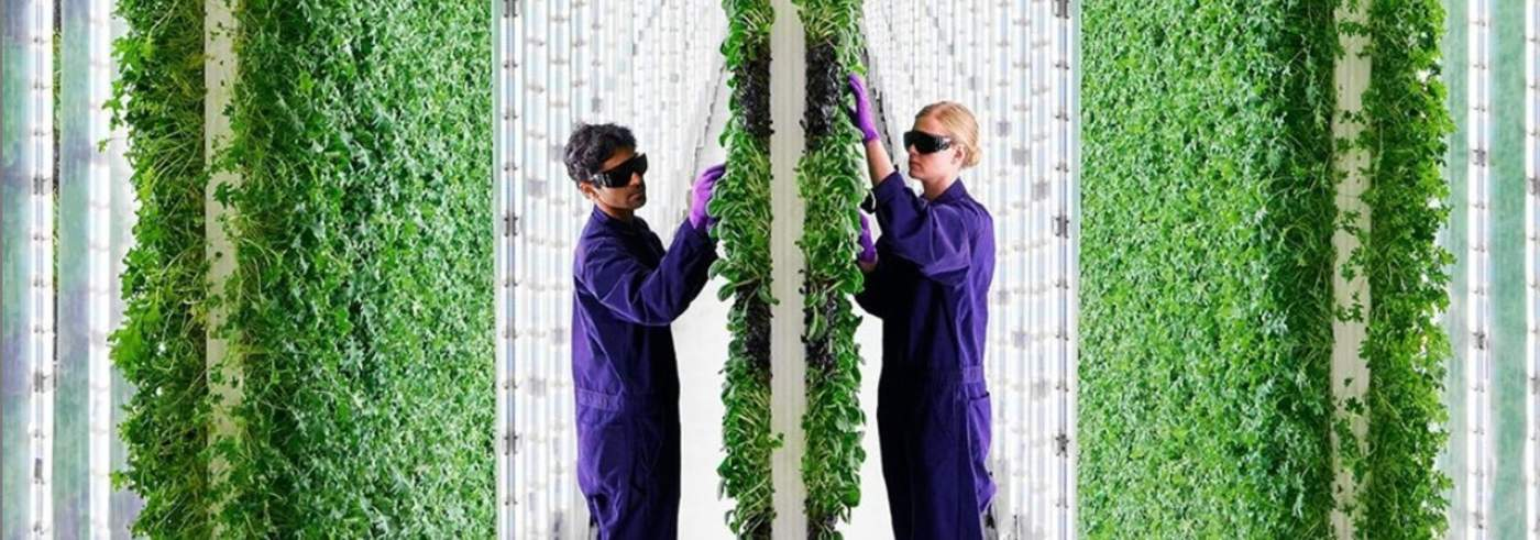 This 2-Acre Vertical Farm Produces More Than Flat Farms That Are Using 720 Acres - Picture shows a man and woman vertical farming.