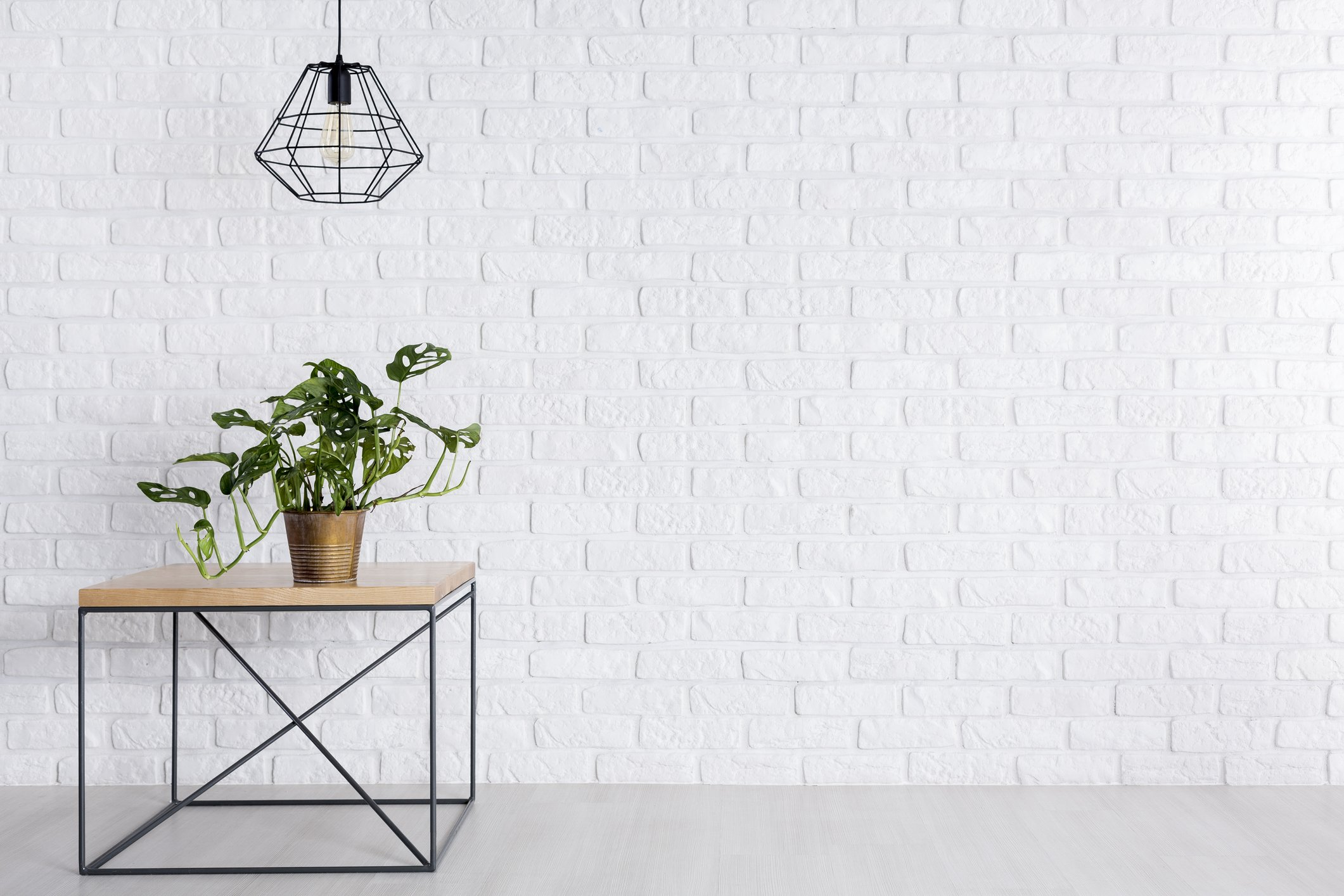 Fresh green potted plant standing on square table in room with empty brick wall
