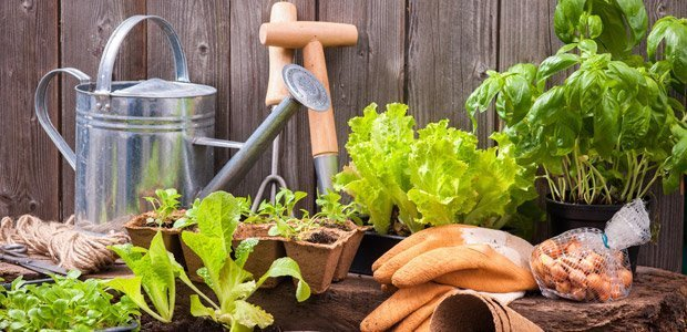A picture of gardening utensils and various plants to plant in your home garden.