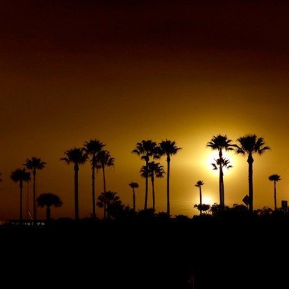 Silhouette of palm trees against a setting sun.
